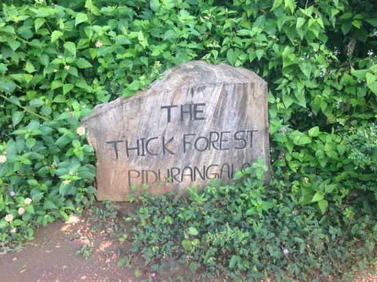 Thick Forest: Entrance