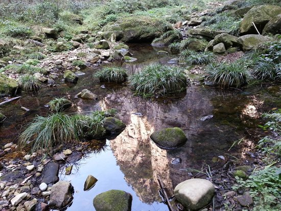 Golden Whip Brook: Mountain Reflections in the water