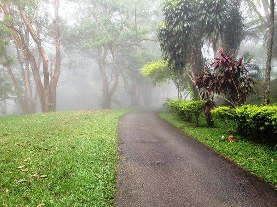 Awana Hotel: Hotel garden.