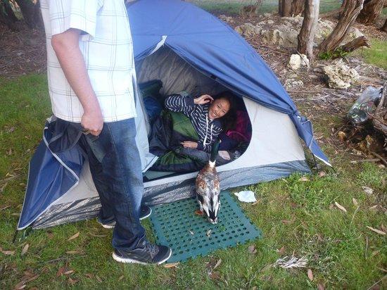 Western KI Caravan Park and Wildlife Reserve: Morning visitor