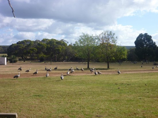 Western KI Caravan Park and Wildlife Reserve: view from the tent