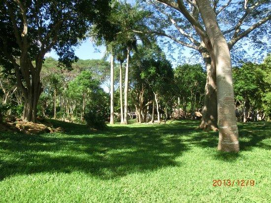 Hotel & Bungalows Mayaland: Garden pic
