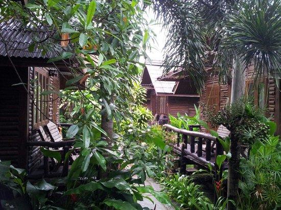Banana Garden Home : L allee centrale