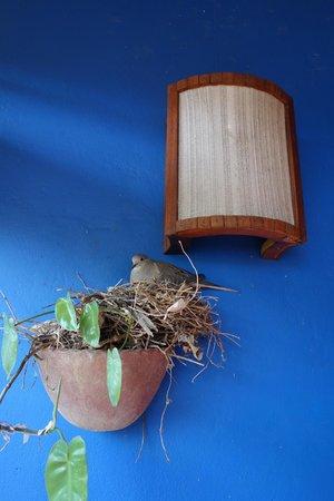 Hostal La Tortuga Booluda : Mourning Doves.  (I think)