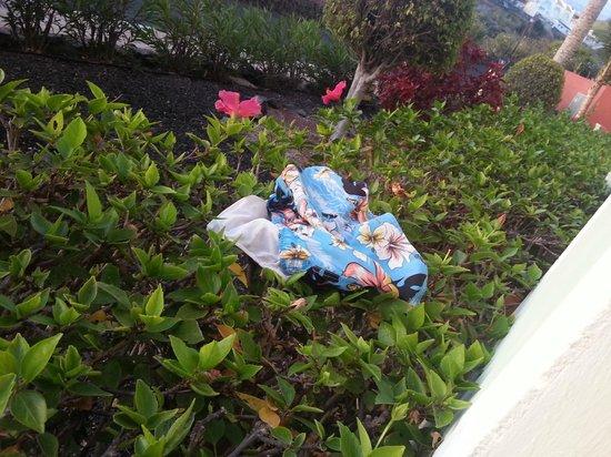 Bahia Principe Costa Adeje: Este bañador usado estuvo hay toda la semana en el seto de la terraza, y allí se quedo ...