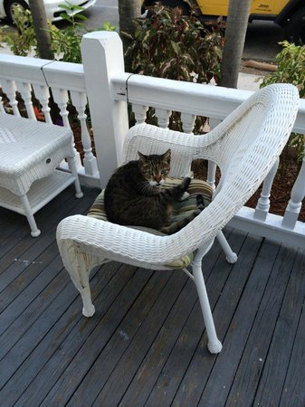 The Palms Hotel- Key West: Hauskatze
