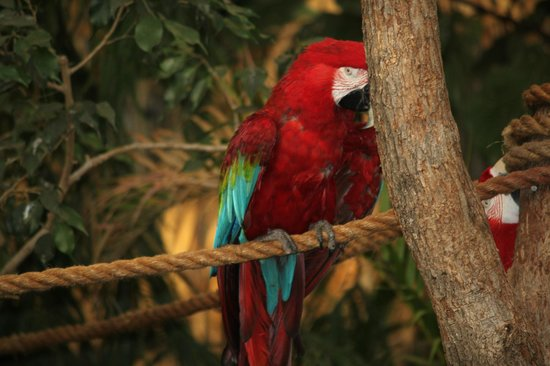 National Zoological Park : Parrot
