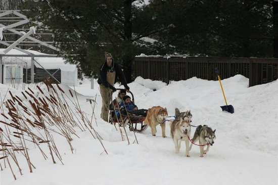 Taboo Muskoka Resort: Dog sledding