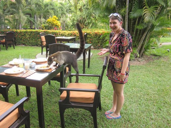 """Occidental Papagayo - Adults only: Wildlife by the pool at the """"Snack Bar"""""""
