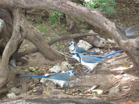 Occidental Grand Papagayo by Barcelo : Wildlife on the beach.