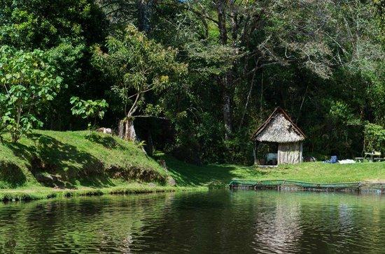 Estanque con truchas fotograf a de truchas selva madre for Estanque de truchas