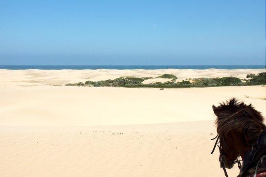 Papiesfontein Beach Horse Rides: Climbing onto the dunes