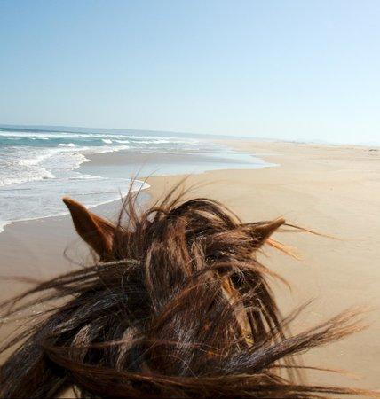 Papiesfontein Beach Horse Rides : Riding at the beach