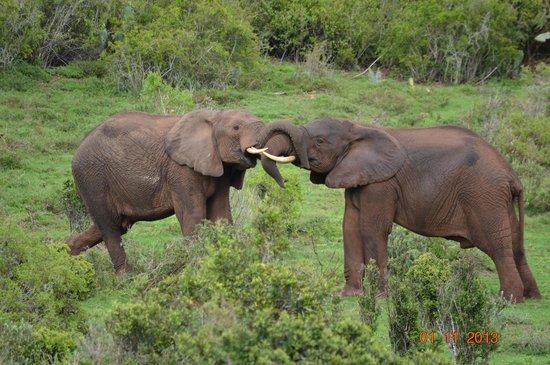 Alan Tours: elephant antics