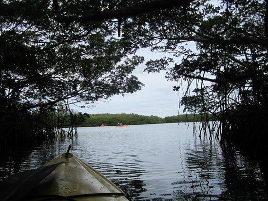 Bay & Gulf Adventures: Mangrove