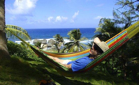 Sea-U Guest House: relaxing/decompressing at Sea U