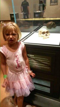Maropeng Visitor Centre : Mrs Ples original skull on display