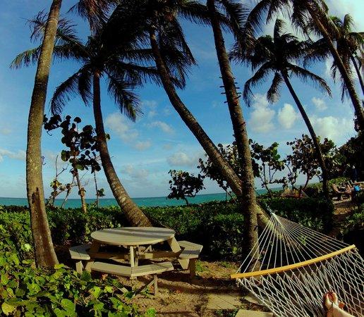 Jupiter Beach Resort: Hammocks looking out to the ocean
