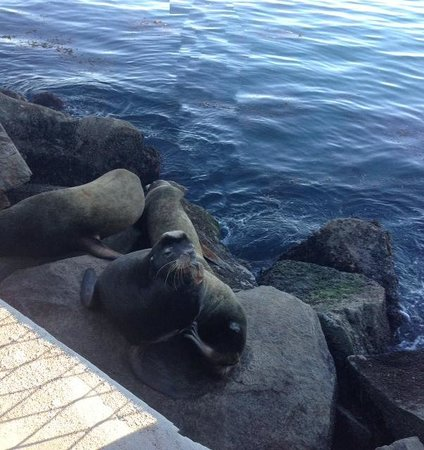 Coast Guard Pier : Friends at the Pier