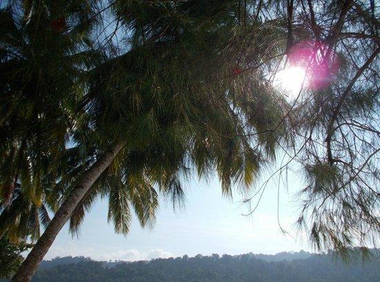 Beras Basah Island: Island View1