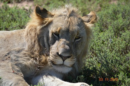 Shamwari Game Reserve Lodges: game viewing