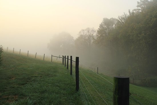 Airy Hill Farm B&B: morning mist