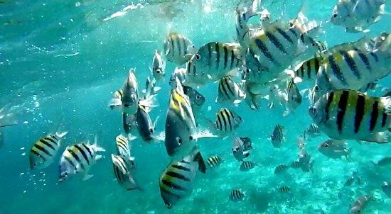 "Cocotal Inn & Cabanas: Snorkel ""Mexico Rocks"""