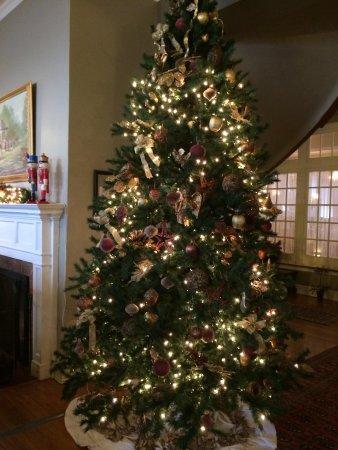 The Mimslyn Inn: Beautiful tree.