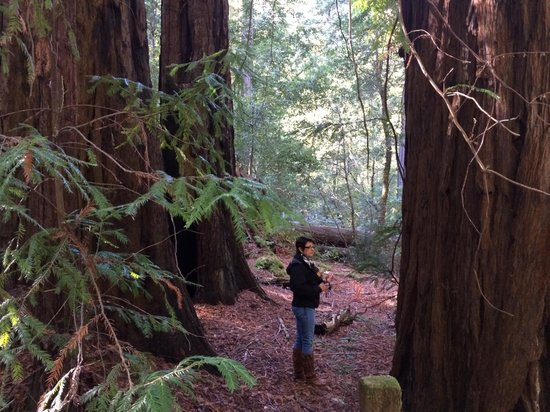 Big Basin Redwoods State Park: just to give you an idea of the size.