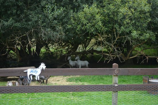 Gypsy Wood Park : which goats are alive and which are plastic