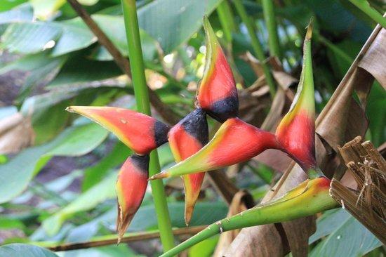 Allerton Garden: A tropical flower...