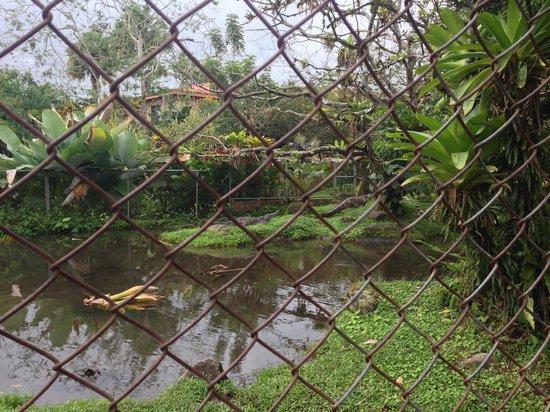 Los Lagos Hotel Spa & Resort : Crocodiles