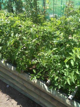 Bellavista Country Place : Organic gardening