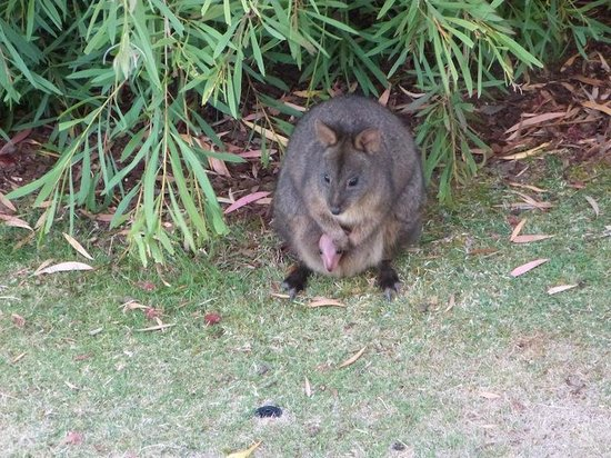 Launceston Bed and Breakfast Retreat: Visiting wildlife