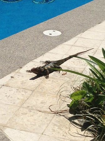 DoceLunas Hotel, Restaurant & Spa: A friendly visitor to the pool