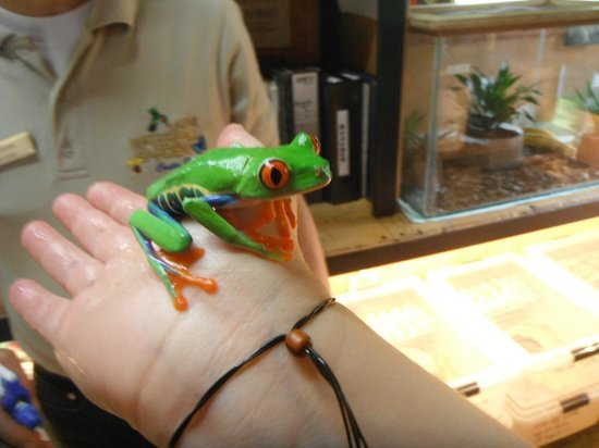 Peace Lodge: Frog at La Paz Waterfall Gardens