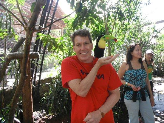 Peace Lodge : Toucan feeding La Paz Waterfall Gardens