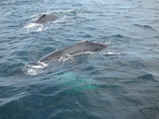 Marietas Islands: Whales
