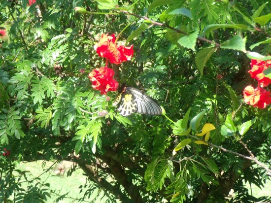 Mai Siam Resort : Jardin