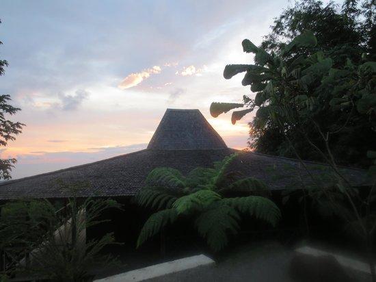 Manu Yoga Retreats : The treehouse