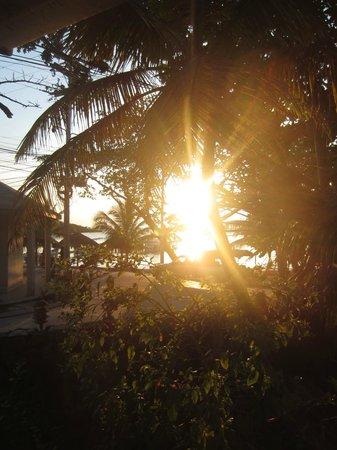 Coconut Tree West Bay: .