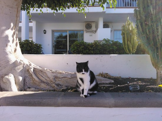 Hotel Floresta: our freindly resident named spot by my children