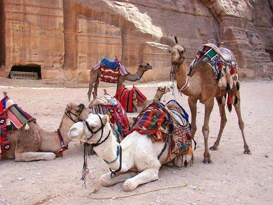 Petra Guesthouse : Petra transportation