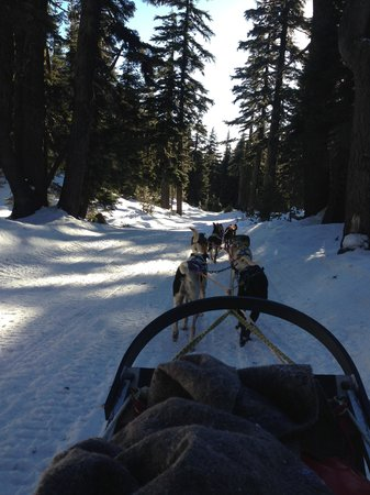 Oregon Trail of Dreams : view from sled