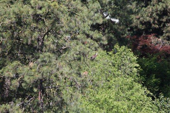 Enchanted River Inn: Osprey