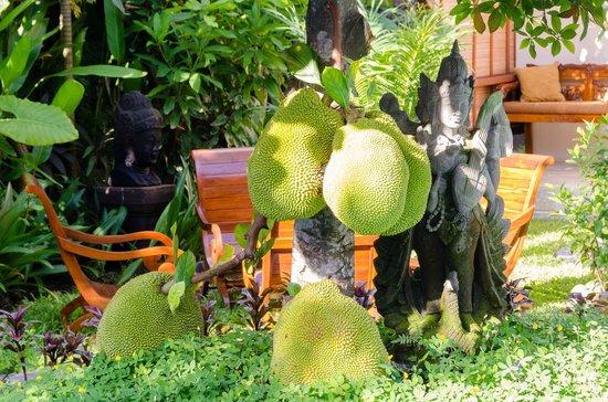 Klumpu Bali Resort: Jackfuits