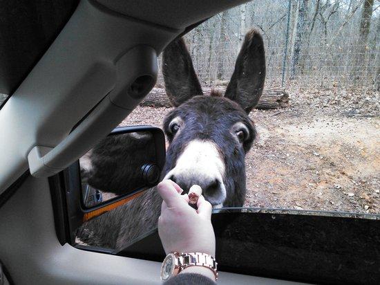 Circle G Ranch: Wild Animal Park & Camel Safari: Donkey