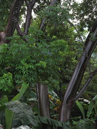 Las Rocas Resort & Dive Center: Beautiful trees outside my room