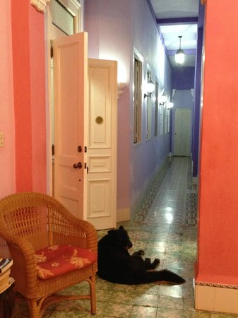 Casa Eclectica 1925: Hallway to rooms with cute mascot Rockie