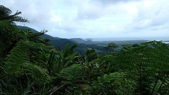 Daintree National Park : Mount Alexandra view